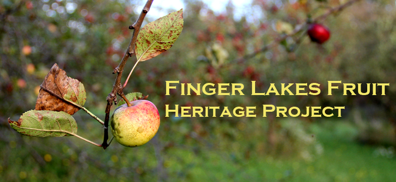 Finger Lakes Fruit Heritage Project